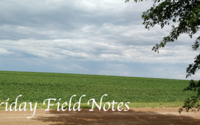 Friday Field Notes
