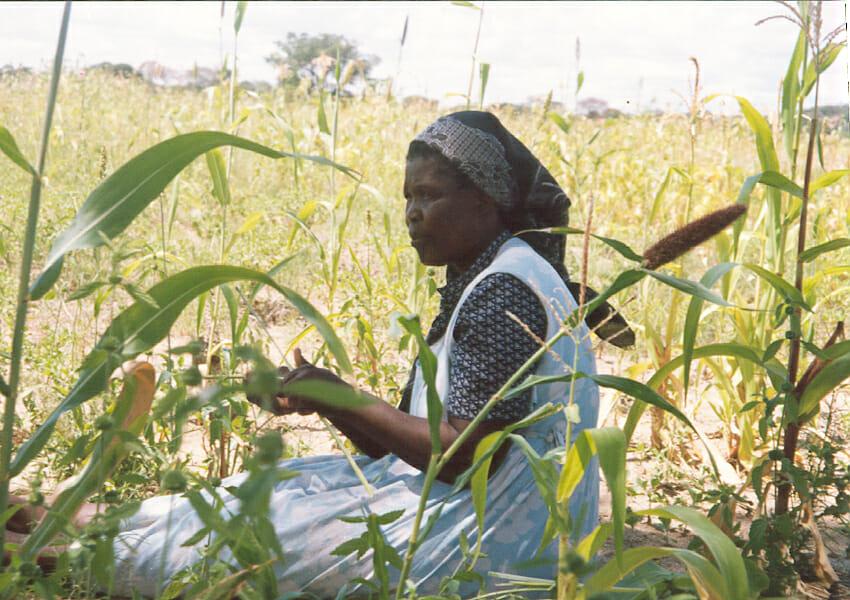 Harvest in Due Season